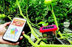 aplikasi pertanian indonesia terbaik